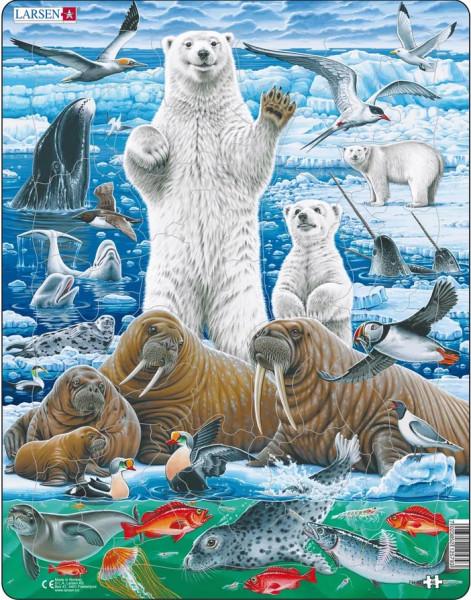 Larsen - Puzzle Nordpol Eisbär und Walross